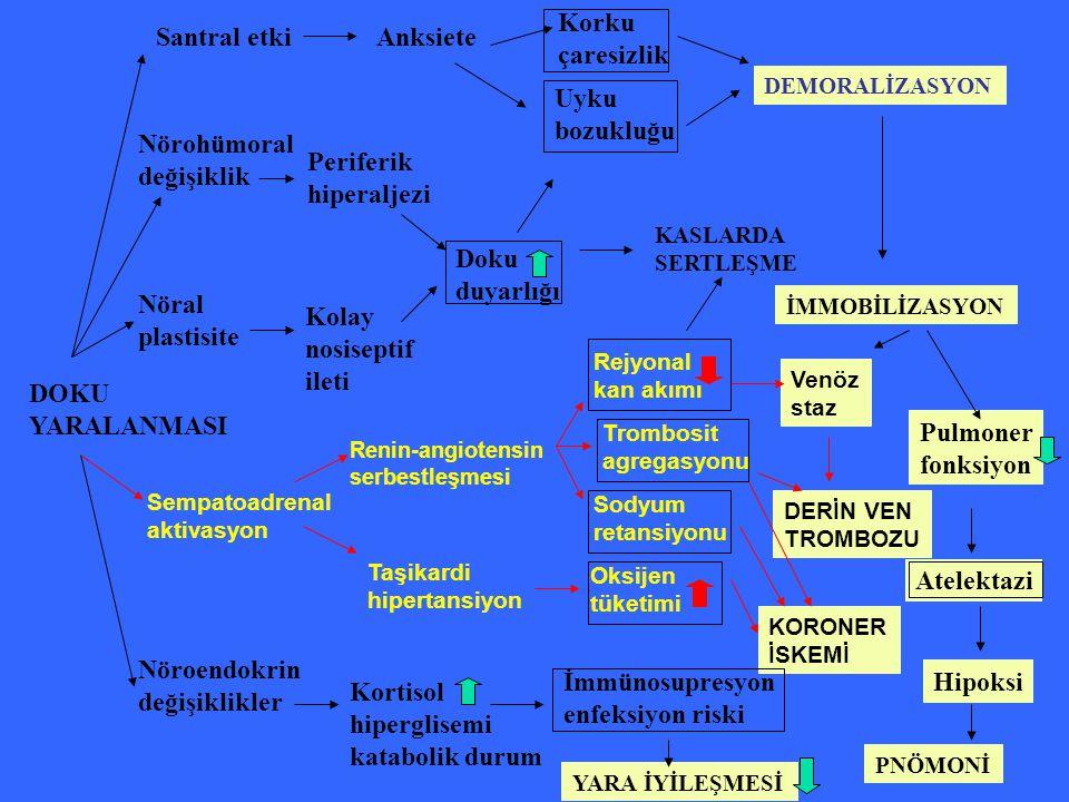DOKU YARALANMASI Santral etki Nörohümoral değişiklik Nöral plastisite Sempatoadrenal aktivasyon Nöroendokrin değişiklikler Anksiete Periferik hiperalj