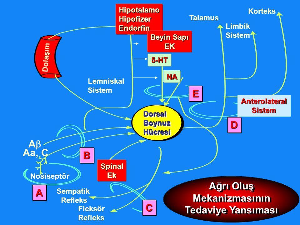 Talamus HipotalamoHipofizerEndorfin Limbik Sistem Korteks Dolaşım DorsalBoynuzHücresiDorsalBoynuzHücresi SpinalEk Nosiseptör Sempatik Refleks Fleksör