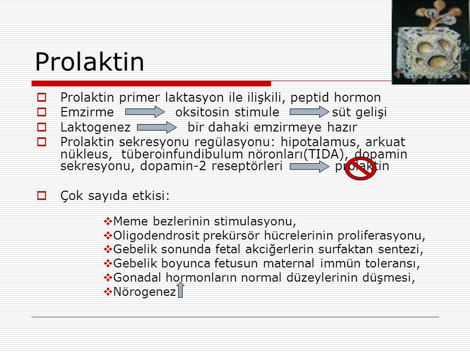 Prolaktin  Prolaktin primer laktasyon ile ilişkili, peptid hormon  Emzirme oksitosin stimule süt gelişi  Laktogenez bir dahaki emzirmeye hazır  Prolaktin sekresyonu regülasyonu: hipotalamus, arkuat nükleus, tüberoinfundibulum nöronları(TIDA), dopamin sekresyonu, dopamin-2 reseptörleri prolaktin  Çok sayıda etkisi:  Meme bezlerinin stimulasyonu,  Oligodendrosit prekürsör hücrelerinin proliferasyonu,  Gebelik sonunda fetal akciğerlerin surfaktan sentezi,  Gebelik boyunca fetusun maternal immün toleransı,  Gonadal hormonların normal düzeylerinin düşmesi,  Nörogenez