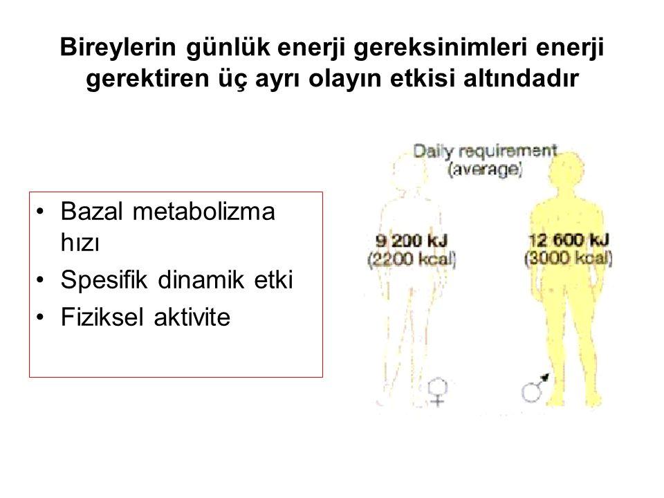 Bireylerin günlük enerji gereksinimleri enerji gerektiren üç ayrı olayın etkisi altındadır Bazal metabolizma hızı Spesifik dinamik etki Fiziksel aktivite