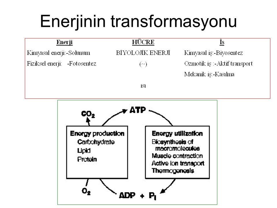 Hücreye enerji sağlanmasında yani kimyasal veya fiziksel enerjinin biyolojik enerjiye (ATP) çevrilmesinde bir elektron donöründen (vericisinden) bir elektron akseptörüne (alıcısına) elektron transportu mekanizması yer alır