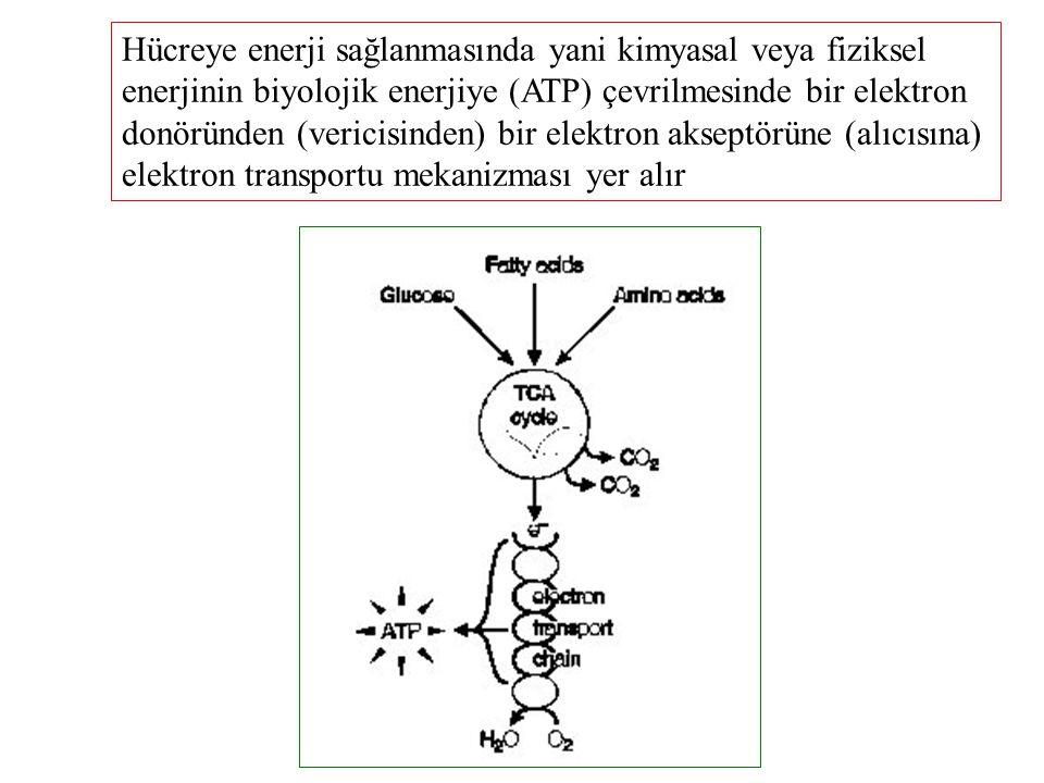 Enerji birikimi 1 Bir hücrenin dışarıdan aldığı enerji substratının yeterli olmadığı zamanlarda kullanılmak üzere hücrede enerji substratı birikimi olmalıdır
