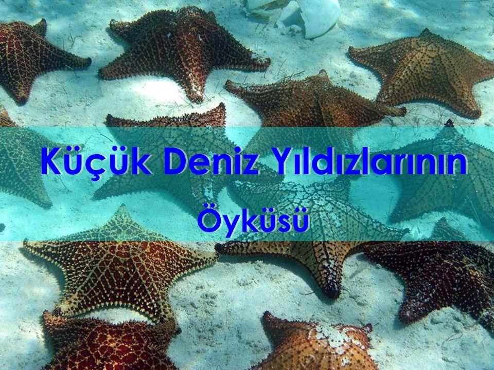 Küçük Deniz Yıldızlarının Öyküsü Küçük Deniz Yıldızlarının Öyküsü