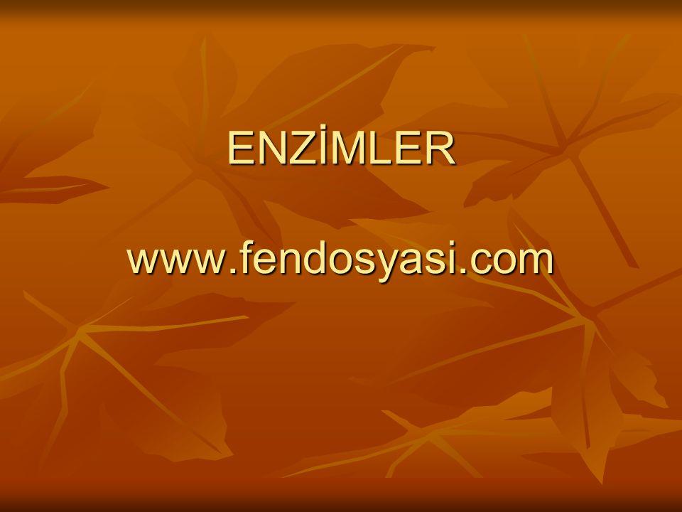 ENZİMLER www.fendosyasi.com