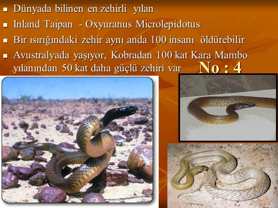 No : 4 Dünyada bilinen en zehirli yılan Dünyada bilinen en zehirli yılan Inland Taipan - Oxyuranus Microlepidotus Inland Taipan - Oxyuranus Microlepid