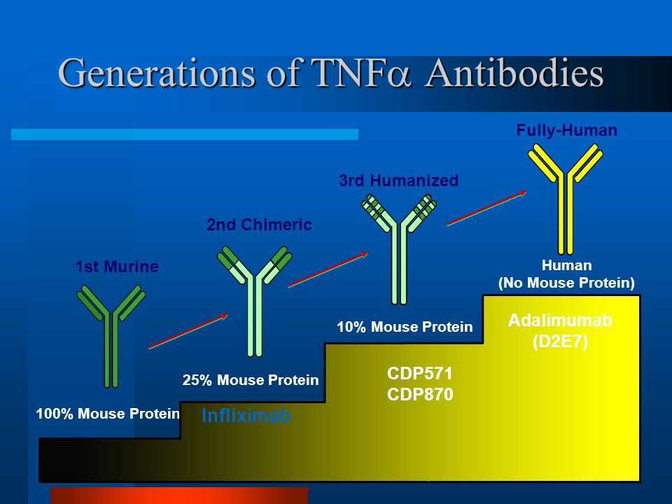 Generations of TNF  Antibodies 1st Murine 2nd Chimeric 3rd Humanized Fully-Human 10% Mouse Protein Human (No Mouse Protein) 25% Mouse Protein 100% Mo