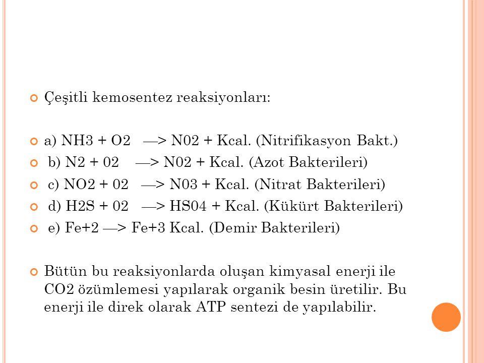Çeşitli kemosentez reaksiyonları: a) NH3 + O2 —> N02 + Kcal. (Nitrifikasyon Bakt.) b) N2 + 02 —> N02 + Kcal. (Azot Bakterileri) c) NO2 + 02 —> N03 + K