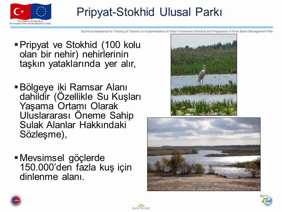 Pripyat-Stokhid Ulusal Parkı  Pripyat ve Stokhid (100 kolu olan bir nehir) nehirlerinin taşkın yataklarında yer alır,  Bölgeye iki Ramsar Alanı dahi