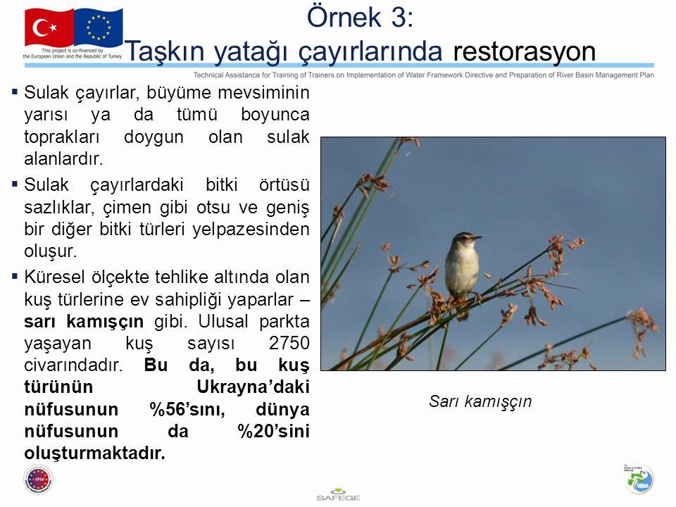 Örnek 3: Taşkın yatağı çayırlarında restorasyon  Sulak çayırlar, büyüme mevsiminin yarısı ya da tümü boyunca toprakları doygun olan sulak alanlardır.