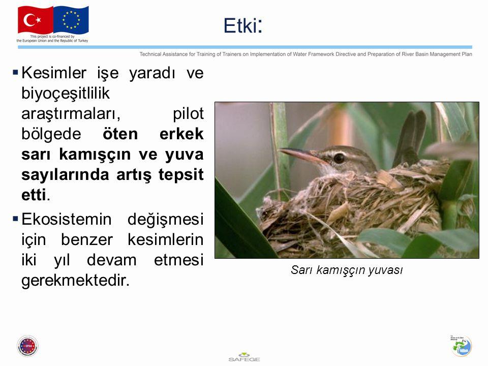 Etki :  Kesimler işe yaradı ve biyoçeşitlilik araştırmaları, pilot bölgede öten erkek sarı kamışçın ve yuva sayılarında artış tepsit etti.  Ekosiste