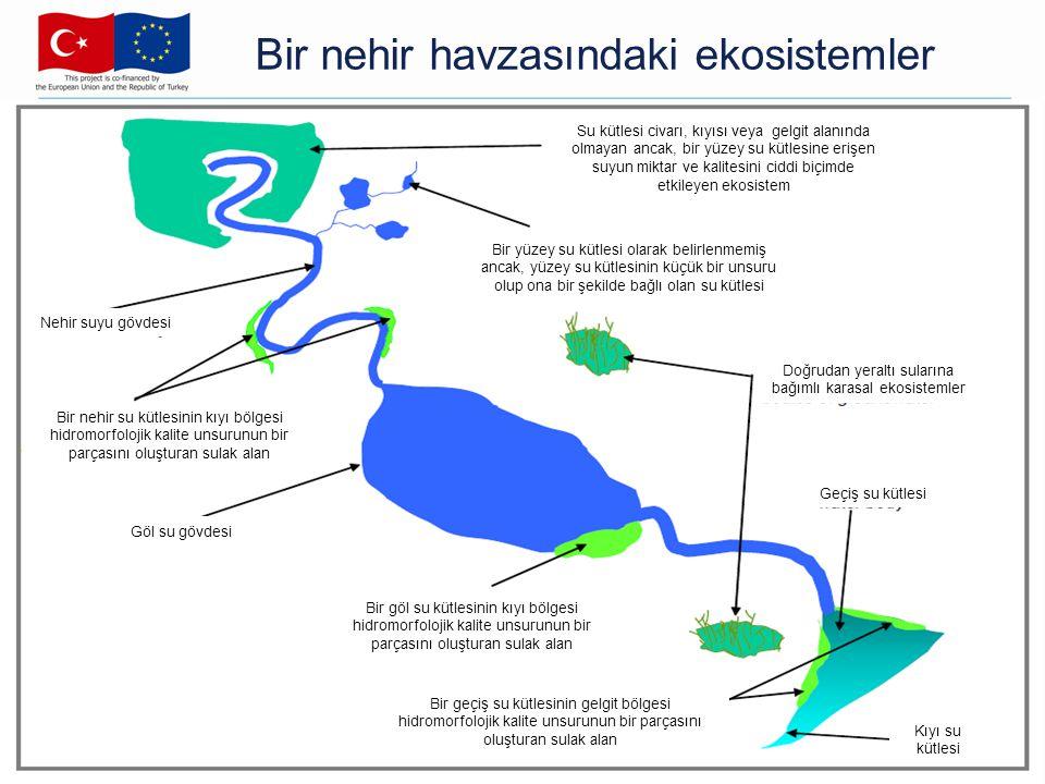 Bir nehir havzasındaki ekosistemler Su kütlesi civarı, kıyısı veya gelgit alanında olmayan ancak, bir yüzey su kütlesine erişen suyun miktar ve kalite