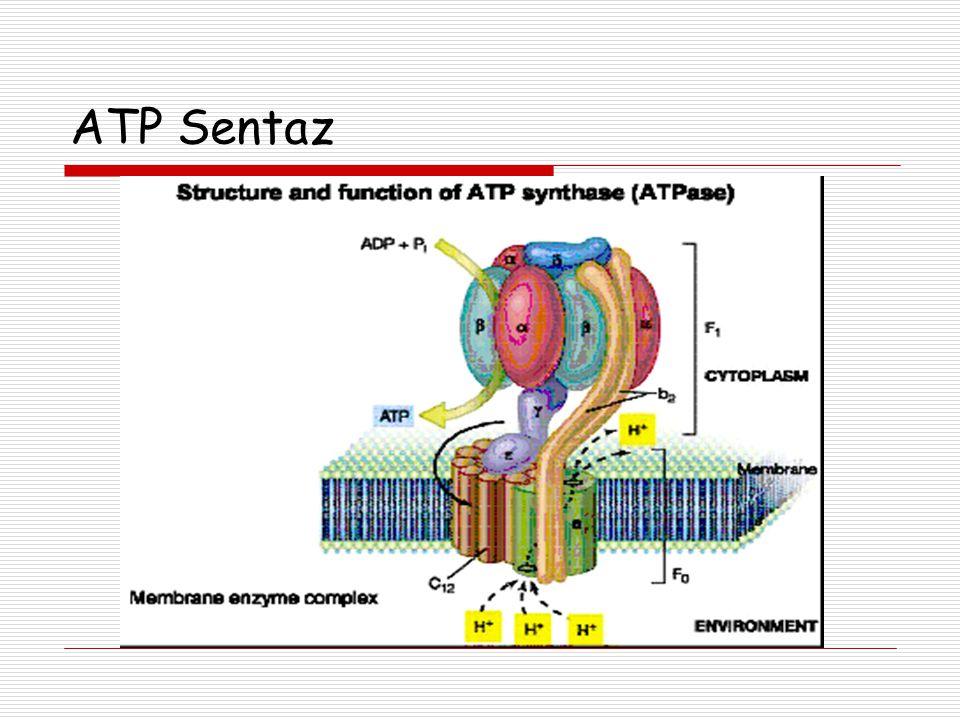 ATP Sentaz