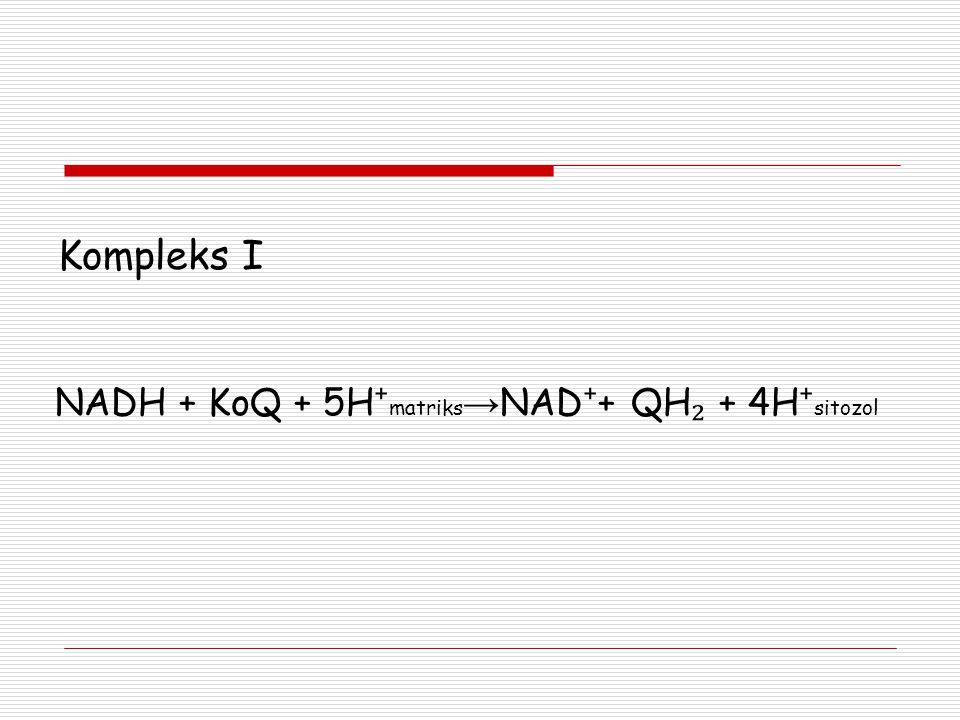 Kompleks I NADH + KoQ + 5H ⁺ matriks → NAD ⁺ + QH ₂ + 4H ⁺ sitozol