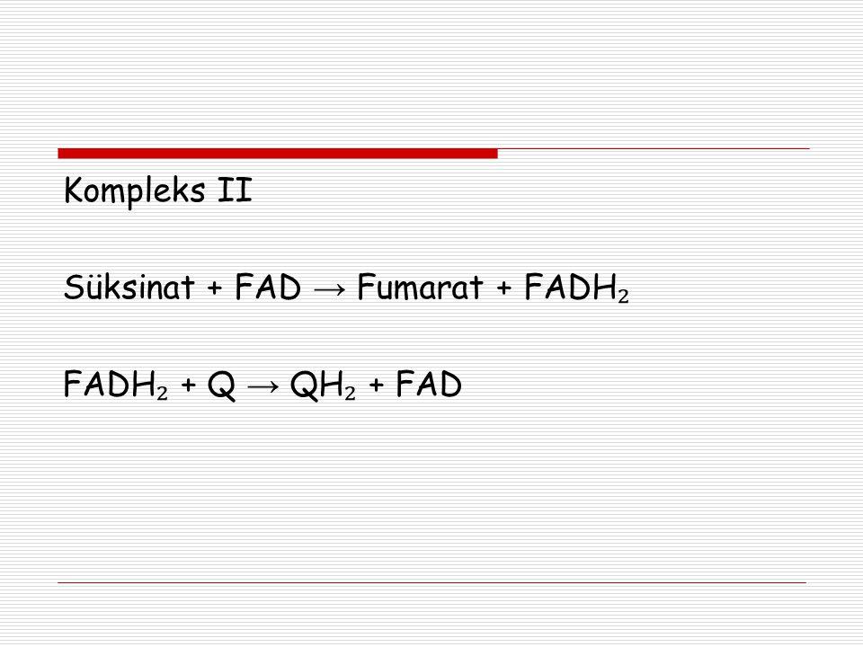 Kompleks II Süksinat + FAD → Fumarat + FADH ₂ FADH ₂ + Q → QH ₂ + FAD