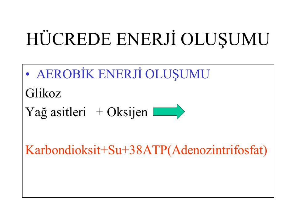 HÜCREDE ENERJİ OLUŞUMU AEROBİK ENERJİ OLUŞUMU Glikoz Yağ asitleri + Oksijen Karbondioksit+Su+38ATP(Adenozintrifosfat)