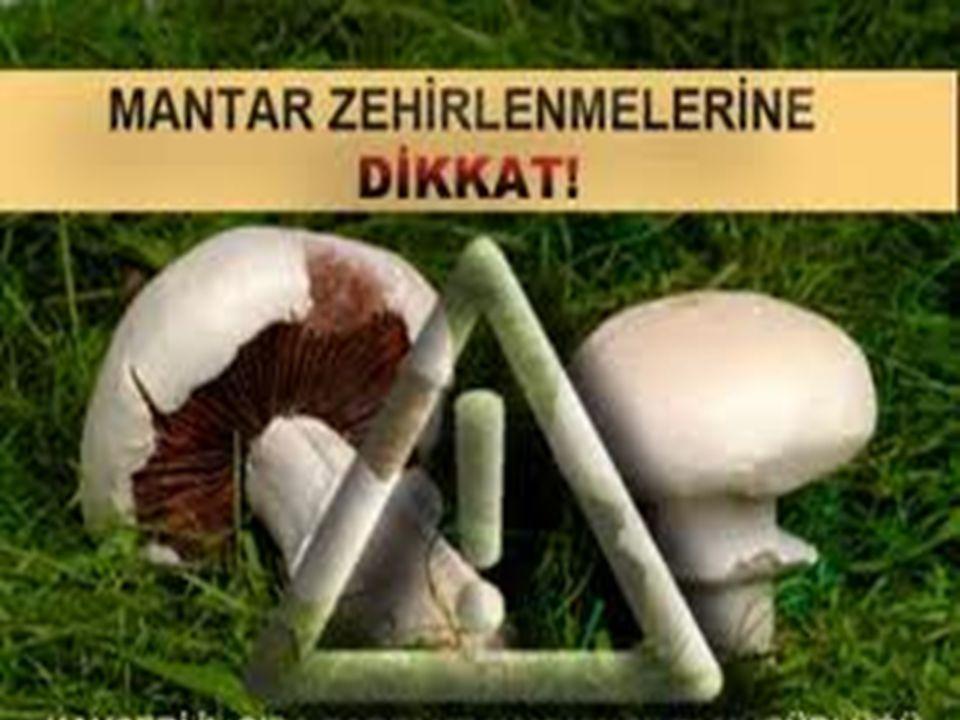 MANTAR ZEHİRLENMELERİNDEN KORUNMA Mantar zehirlenmeleri çok basit bir şekilde önlenebilecek bir zehirlenme türüdür Zehirlenmenin engellenmesinde tek çare doğal alanlarda yetişen mantarların yenilmemesi Bunun yerine kültür mantarlarının tercih edilmesidir