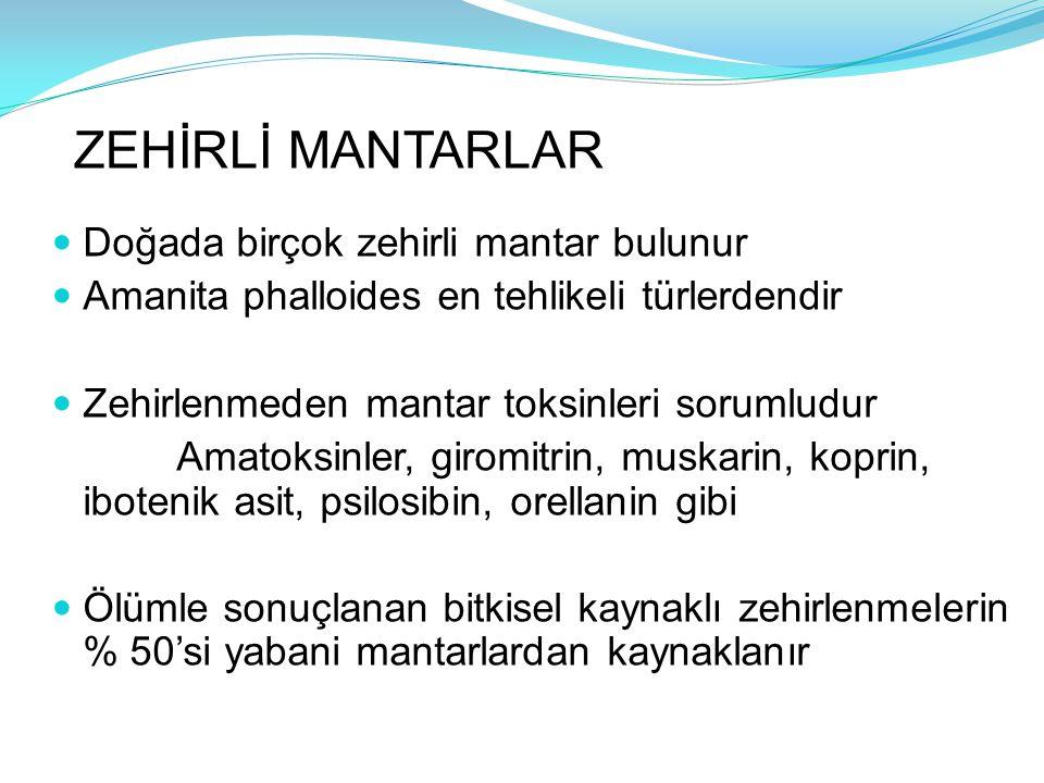 ZEHİRLİ MANTARLAR Doğada birçok zehirli mantar bulunur Amanita phalloides en tehlikeli türlerdendir Zehirlenmeden mantar toksinleri sorumludur Amatoks