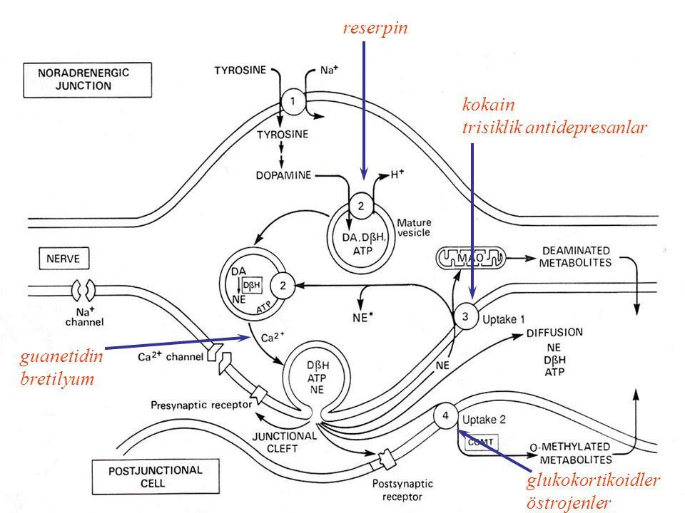 glukokortikoidler östrojenler kokain trisiklik antidepresanlar guanetidin bretilyum reserpin