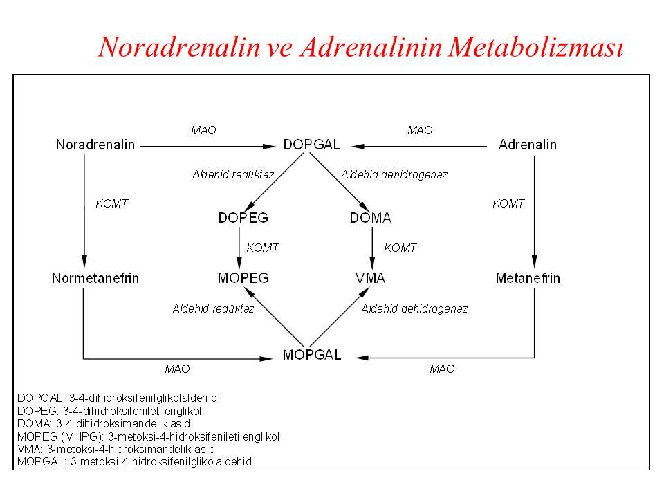 Noradrenalin ve Adrenalinin Metabolizması