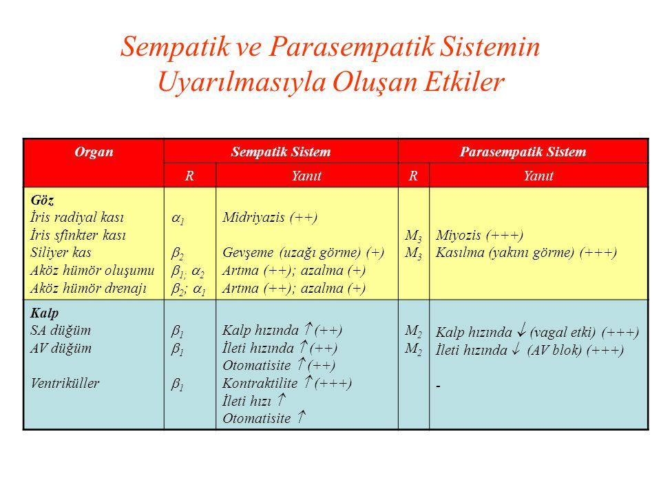 OrganSempatik SistemParasempatik Sistem RYanıtR Göz İris radiyal kası İris sfinkter kası Siliyer kas Aköz hümör oluşumu Aköz hümör drenajı  1  2  1