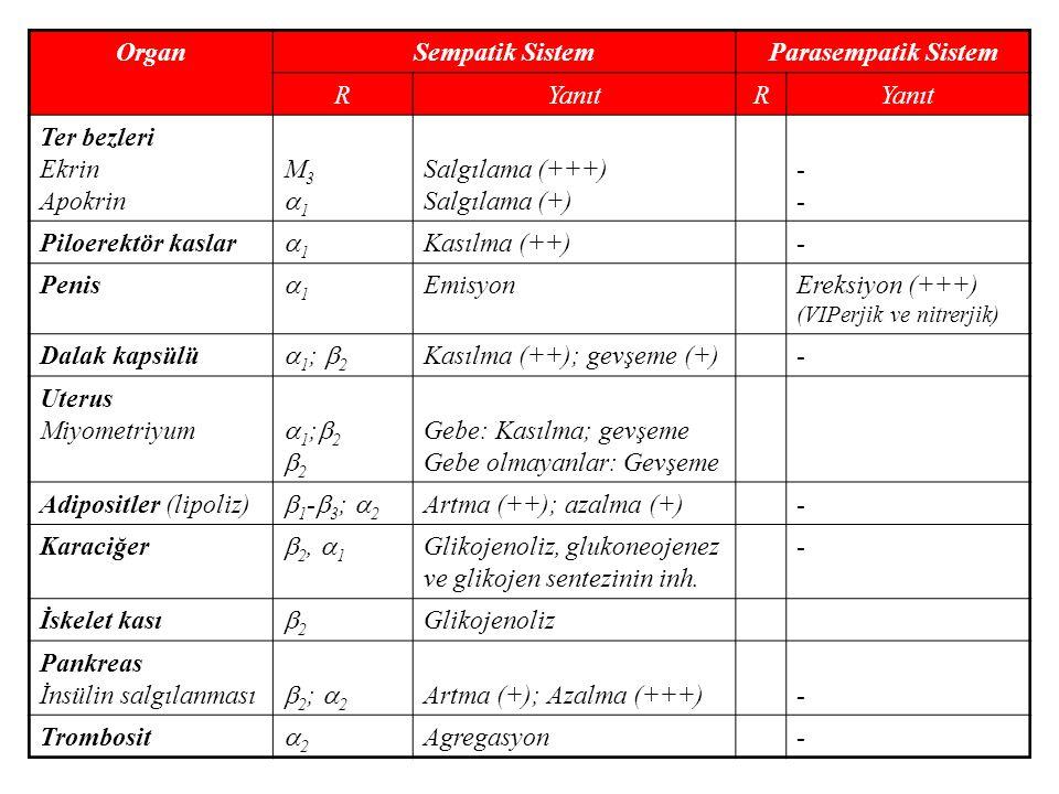 OrganSempatik SistemParasempatik Sistem RYanıtR Ter bezleri Ekrin Apokrin M31M31 Salgılama (+++) Salgılama (+) ---- Piloerektör kaslar 11 Kasılma