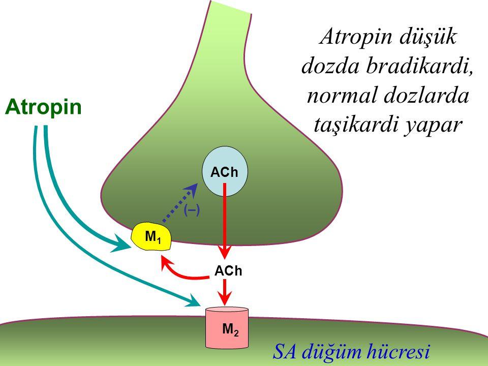 ACh Atropin düşük dozda bradikardi, normal dozlarda taşikardi yapar M2M2 M1M1 ACh (–)(–) Atropin SA düğüm hücresi