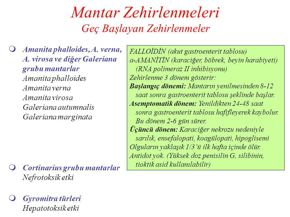 Mantar Zehirlenmeleri Geç Başlayan Zehirlenmeler  Amanita phalloides, A. verna, A. virosa ve diğer Galeriana grubu mantarlar Amanita phalloides Amani