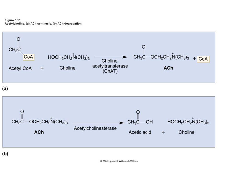 Otonom Sinir Sistemi Farmakolojisi Sempatik Sistem