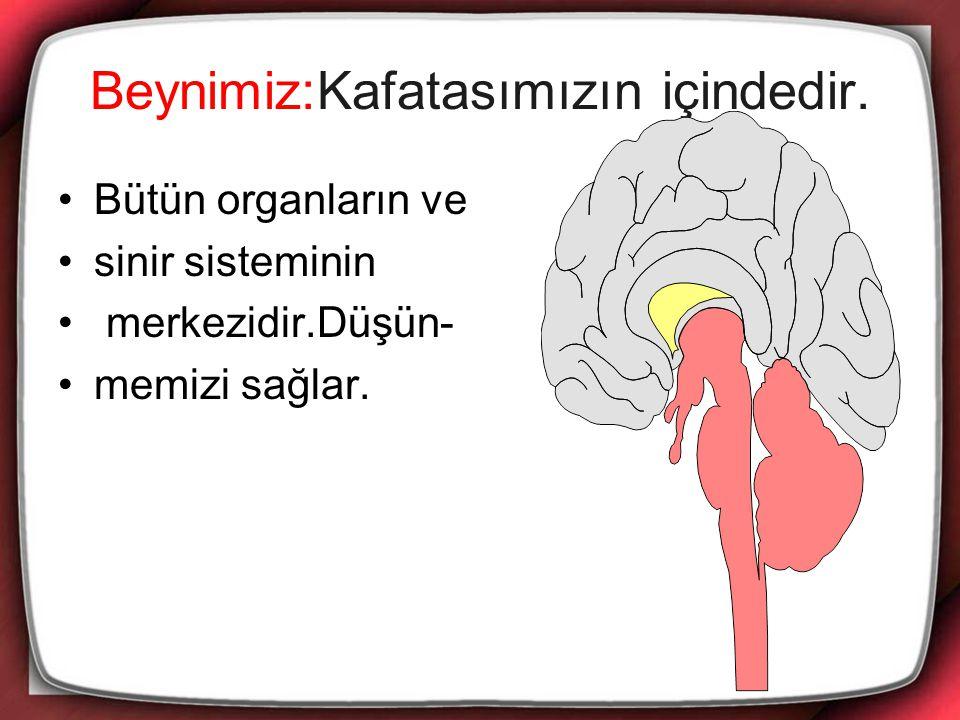 Beynimiz:Kafatasımızın içindedir. Bütün organların ve sinir sisteminin merkezidir.Düşün- memizi sağlar.