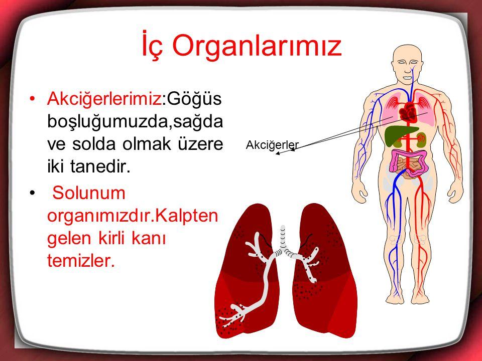 İç Organlarımız Akciğerlerimiz:Göğüs boşluğumuzda,sağda ve solda olmak üzere iki tanedir. Solunum organımızdır.Kalpten gelen kirli kanı temizler. Akci