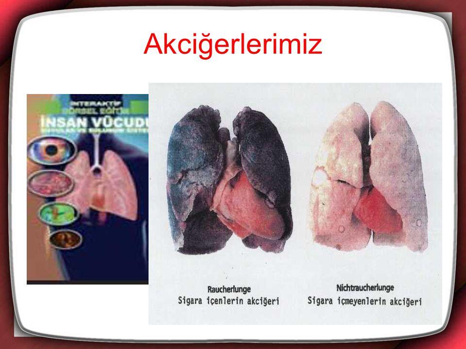 Kalbimiz:Göğüs boşluğunda akciğerlerimizin arasındadır.