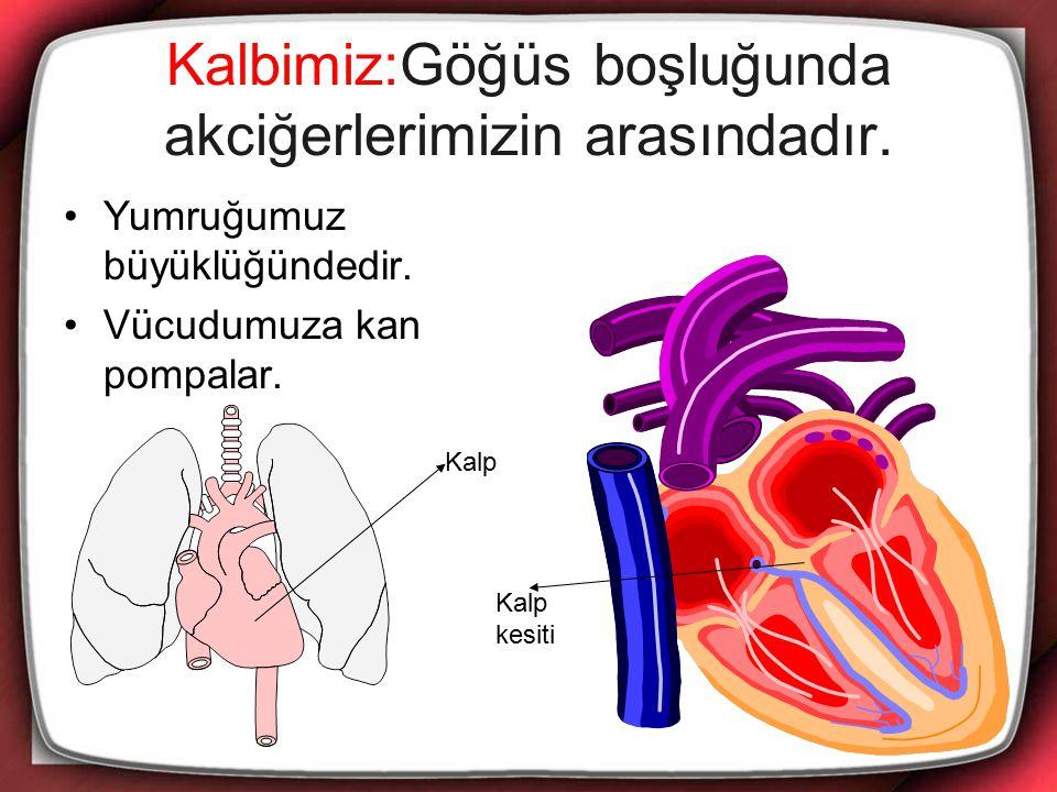 Kalbimiz:Göğüs boşluğunda akciğerlerimizin arasındadır. Yumruğumuz büyüklüğündedir. Vücudumuza kan pompalar. Kalp Kalp kesiti