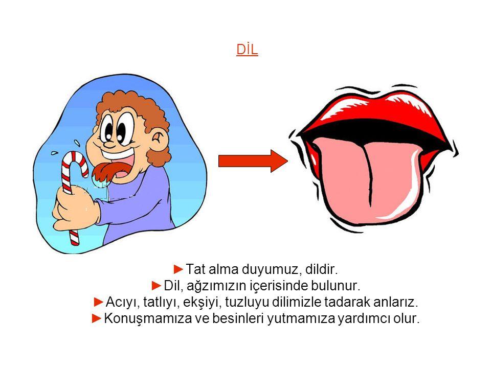 DİL ►Tat alma duyumuz, dildir.►Dil, ağzımızın içerisinde bulunur.