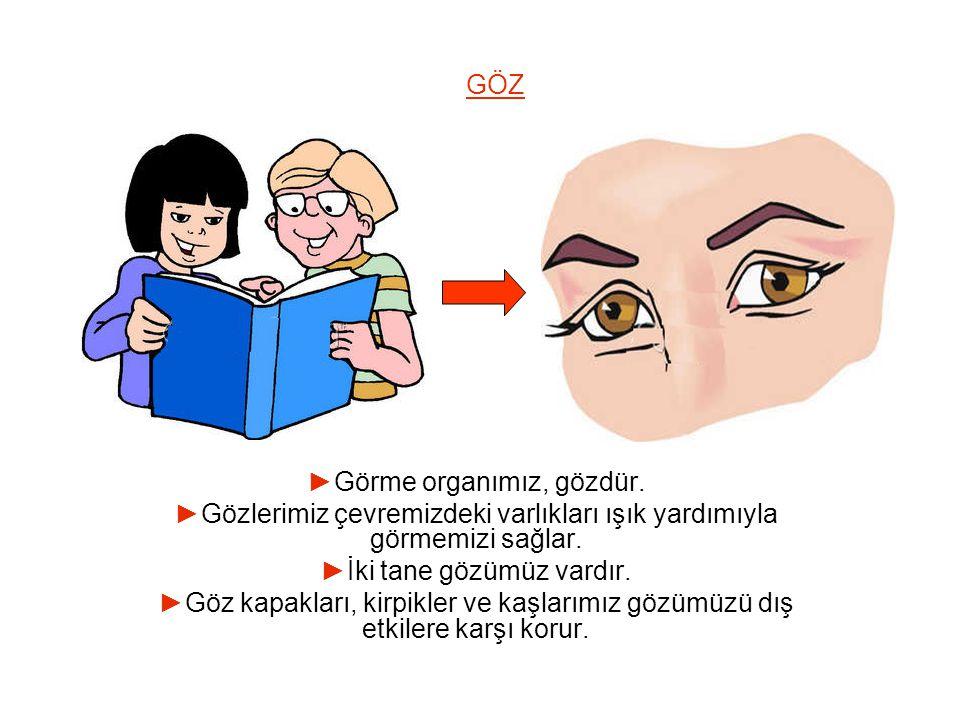 GÖZ ►Görme organımız, gözdür. ►Gözlerimiz çevremizdeki varlıkları ışık yardımıyla görmemizi sağlar. ►İki tane gözümüz vardır. ►Göz kapakları, kirpikle