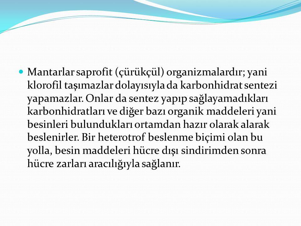 ZEHİRLİ MANTAR ZEHİRSİZ MANTAR