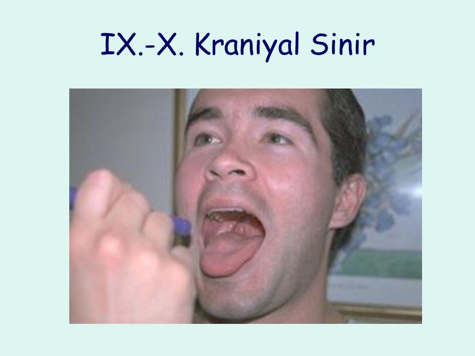 IX.-X. Kraniyal Sinir