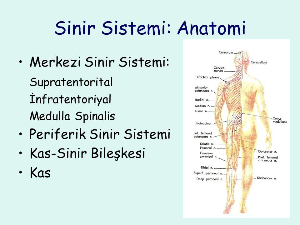 Sinir Sistemi: Anatomi Merkezi Sinir Sistemi: Supratentorital İnfratentoriyal Medulla Spinalis Periferik Sinir Sistemi Kas-Sinir Bileşkesi Kas