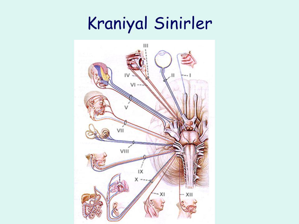 Nörolojik Muayene: Kraniyal Sinirler Koku: KS I Görme: Görme alanı, görme keskinliği, fundoskopik muayene: KS II Pupillar ışık refleksi: KS II, KS III Göz küresi hareketleri: KS III, KS IV, KS VI Yüz duyusu: KS V Yüz kaslarının kuvveti: Çiğneme kasları KS V, mimik kaslar KS VII Duyma: KS VIII Palatal hareketler: KS IX, KS X Baş rotasyonu, omuz elevasyonu: KS XI Dil hareketleri: KS XII