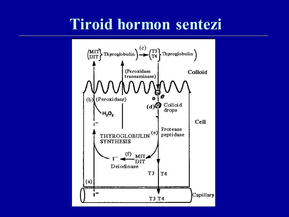 Tiroid hormon sentezi