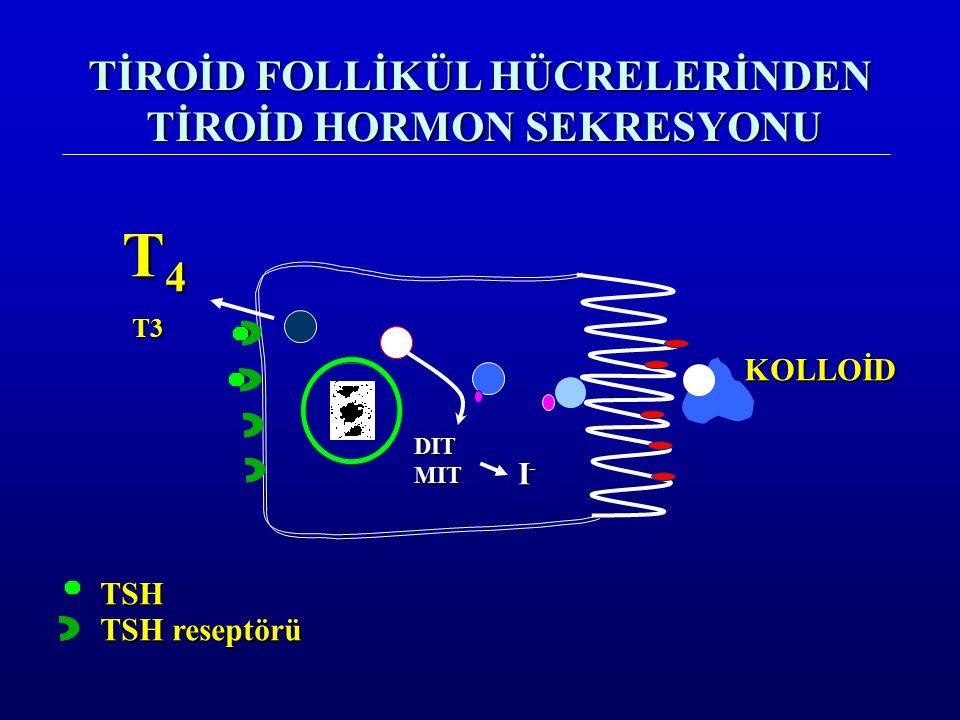 TİROİD FOLLİKÜL HÜCRELERİNDEN TİROİD HORMON SEKRESYONU KOLLOİD TSH TSH reseptörü DITMIT I-I-I-I- T4T4T4T4T3