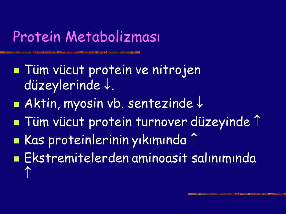 Protein Metabolizması Tüm vücut protein ve nitrojen düzeylerinde . Aktin, myosin vb. sentezinde  Tüm vücut protein turnover düzeyinde  Kas proteinl