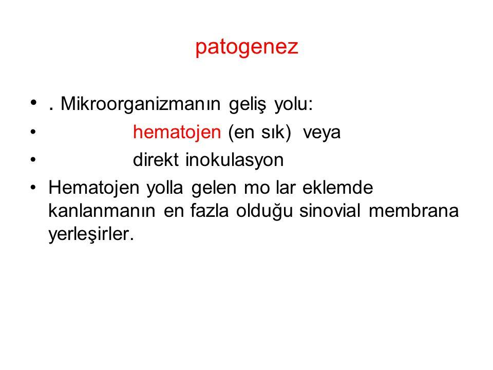 patogenez. Mikroorganizmanın geliş yolu: hematojen (en sık) veya direkt inokulasyon Hematojen yolla gelen mo lar eklemde kanlanmanın en fazla olduğu s