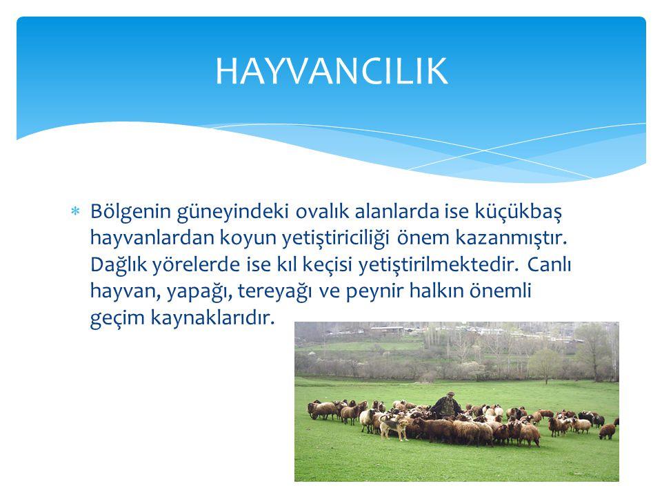  Bölgenin güneyindeki ovalık alanlarda ise küçükbaş hayvanlardan koyun yetiştiriciliği önem kazanmıştır.