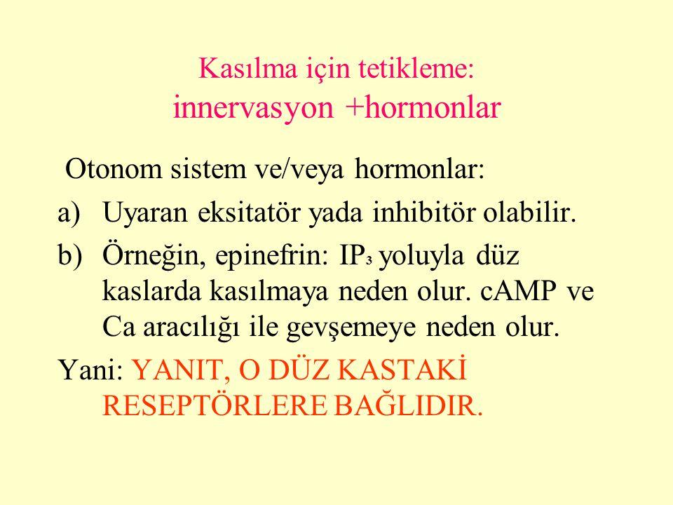 Kasılma için tetikleme: innervasyon +hormonlar Otonom sistem ve/veya hormonlar: a)Uyaran eksitatör yada inhibitör olabilir. b)Örneğin, epinefrin: IP 3