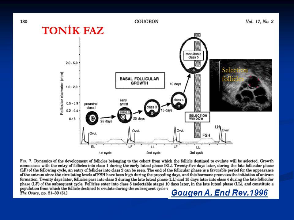 Gougen A. End Rev.1996 Selection follicles TONİK FAZ