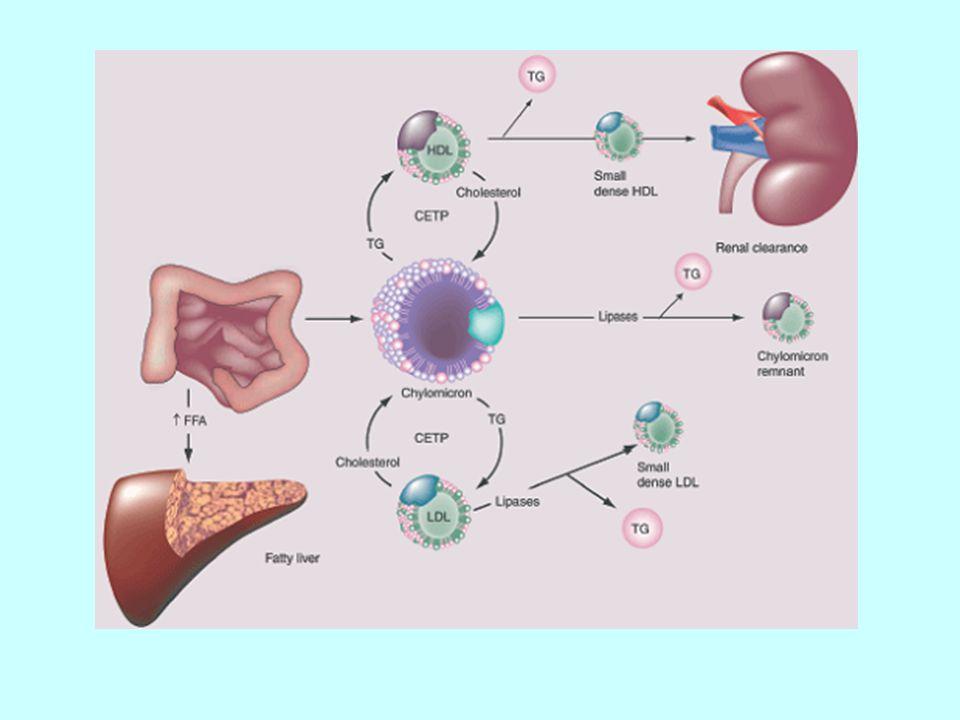 VLDL (çok düşük dansiteli lipoprotein), şilomikronlardan daha küçüktürler.