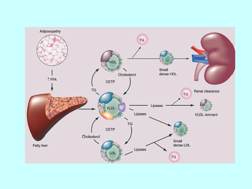 LDL (düşük dansiteli lipoprotein), VLDL artığı olarak damar içinde sentezlenir.