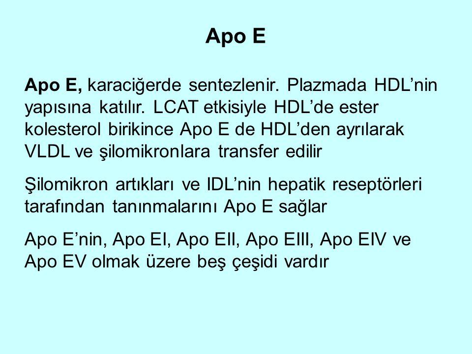 Apo E Apo E, karaciğerde sentezlenir. Plazmada HDL'nin yapısına katılır. LCAT etkisiyle HDL'de ester kolesterol birikince Apo E de HDL'den ayrılarak V
