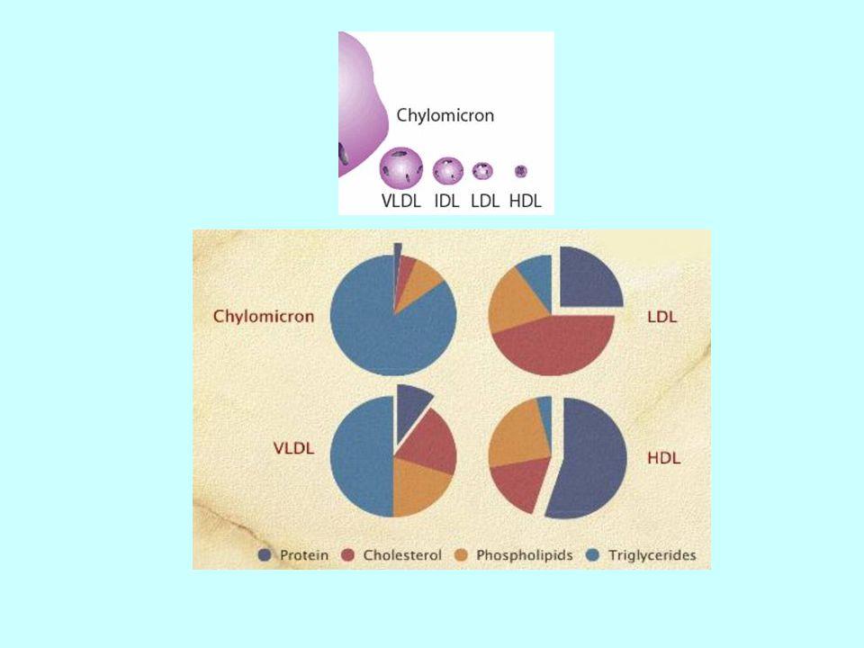 Lipoproteinler, elektroforezdeki ayrılmalarına göre şilomikronlar (tok kişilerde görülür),  lipoprotein (LDL), pre  lipoprotein (VLDL),  lipoprotein (HDL) şeklinde alt gruplara ayrılırlar