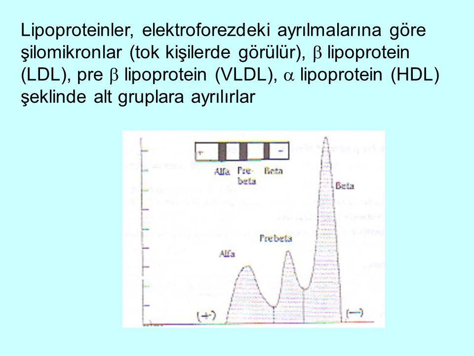Lipoproteinler, elektroforezdeki ayrılmalarına göre şilomikronlar (tok kişilerde görülür),  lipoprotein (LDL), pre  lipoprotein (VLDL),  lipoprotei